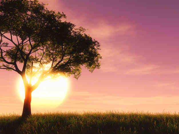 Jika engkau berpuasa, maka pendengaranmu, penglihatanmu dan juga lisanmu juga harus berpuasa dari kedustaan dan perbuatan dosa, dan janganlah engkau hiraukan gunjingan-gunjingan yang datang menghampirimu. Dan jadikanlah ketenangan bagimu dihari-hari puasamu, dan jangan engkau jadikan hari-hari yang biasa engkau jalani sama dengan hari puasamu.